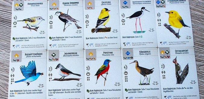 Vogelkarten - Flügelschlag